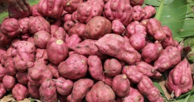 Youth called on to make use of varieties of opportunities in sweet potatoes value chain