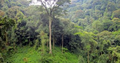 Experts discuss priorities for conservation and sustainable forest management