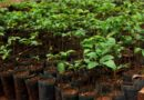 Government accelerates efforts to plant over 700,000 hectares of trees by 2020