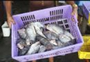 Fish imported into East Africa from China fails toxic minerals test