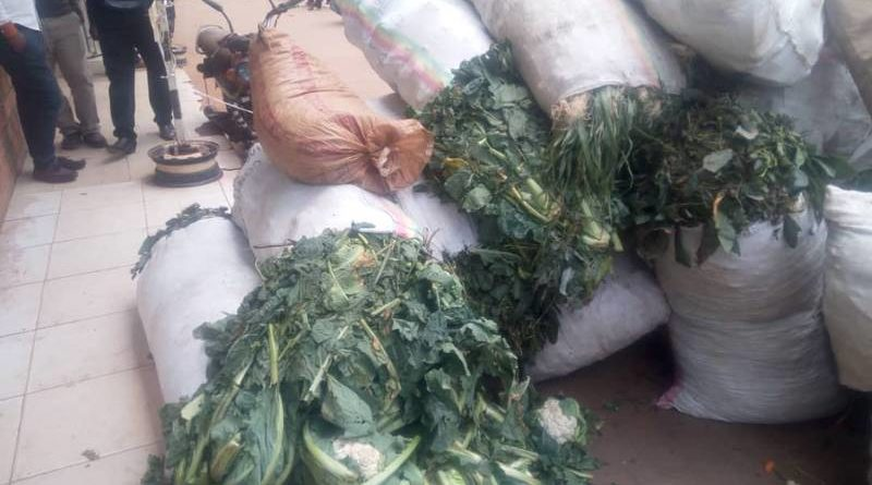 They were not cabbages; they were used clothes being smuggled