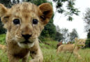 We need to save wild life and its habitats. We can't survive without them