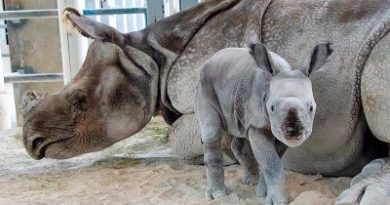 History made: For the first time, a rare rhino was born by artificial insemination